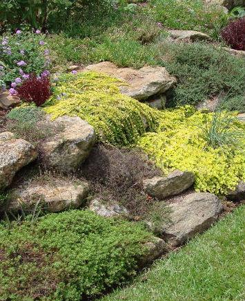 Rock Garden Perennials Faddegon S Nursery Latham Ny
