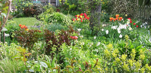 Designing with Perennials | Faddegon's Nursery - Latham, NY