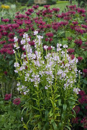 Easy care perennial gardening faddegon 39 s nursery for No maintenance perennials