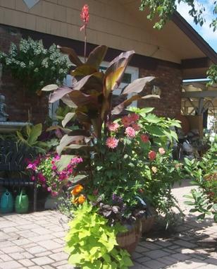 canna container garden albany ny