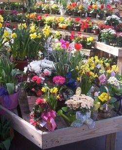 greenhouse easter baskets