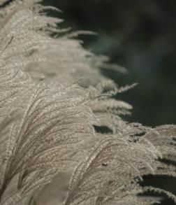 novembergrass