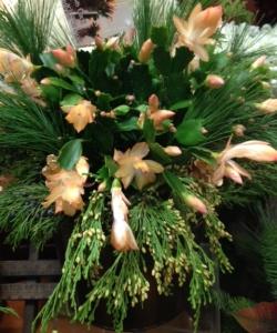 cactuscoral