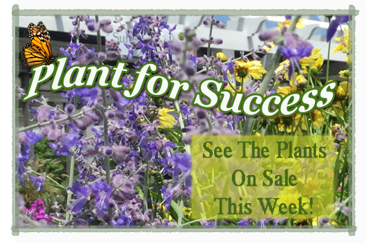 plant for success SAGE