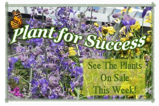 plant for success SAGE