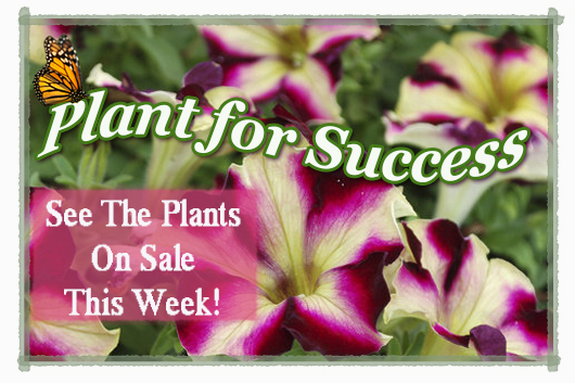 plant for success new3