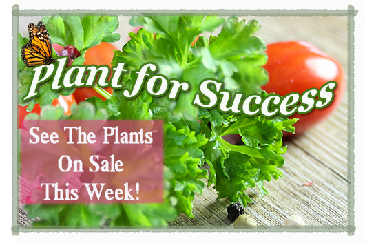 plant for success veg