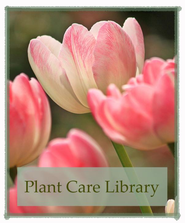 plantcarelibrary