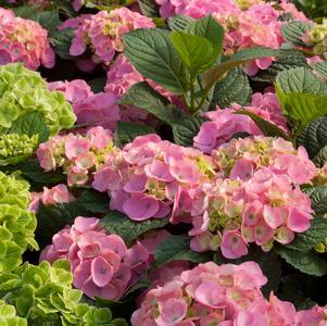 Bloomstruckpridescorners