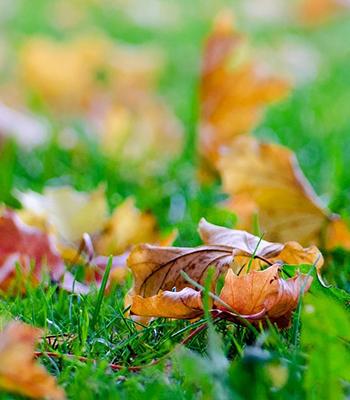 leavespage
