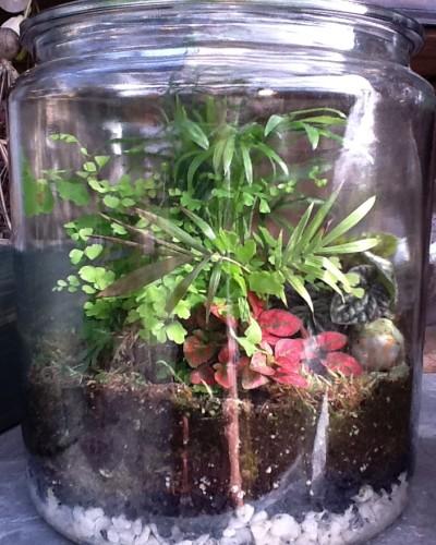 terrariumplaceholder