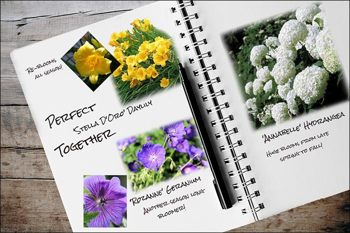 Garden Notebook – Stella, Rozanne, and Annabelle