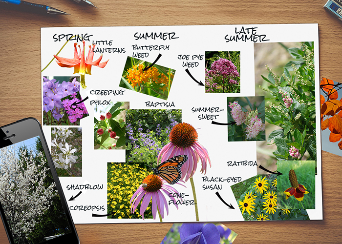 Garden Notebook – Native Plants for Butterflies, Birds & A Beautiful Garden