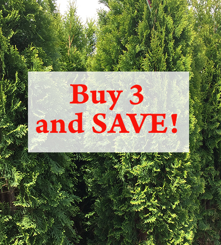 What's Better Than One? Three! How Our Nursery Stock Discount Works