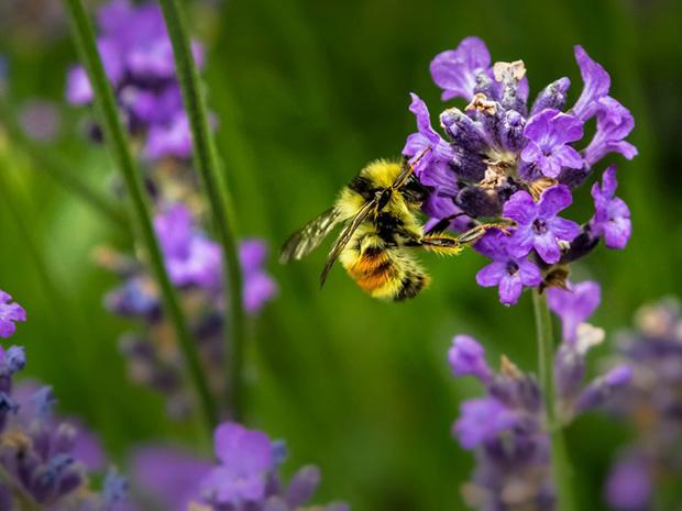 June 23rd, 2018 – Let's Talk Bees! Bees & Beekeeping with Linda Houlihan