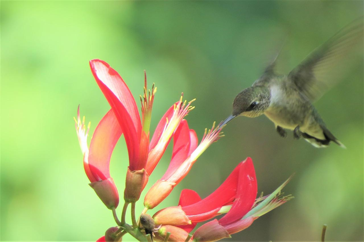 Image result for hummingbird in garden