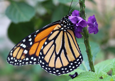 June 7th, 2018 – The World of the Butterfly with Brian Casey