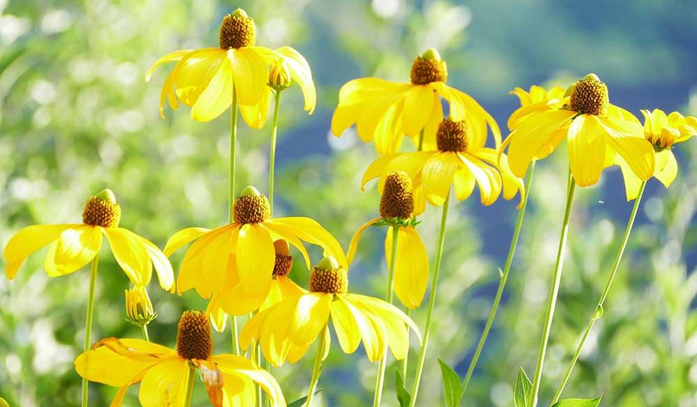July Garden Tips