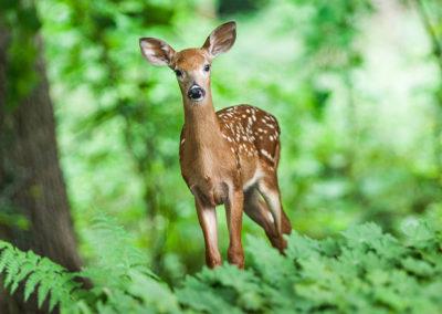 Deer Resistant Plants List