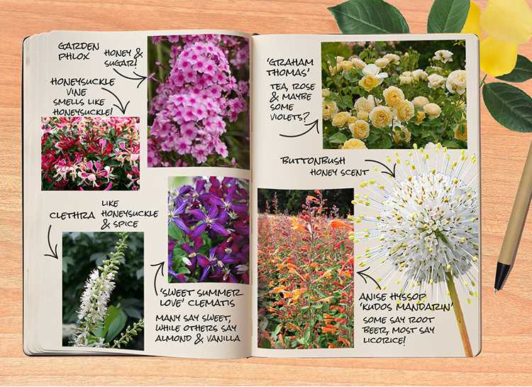 Garden Notebook – Heavenly Scents