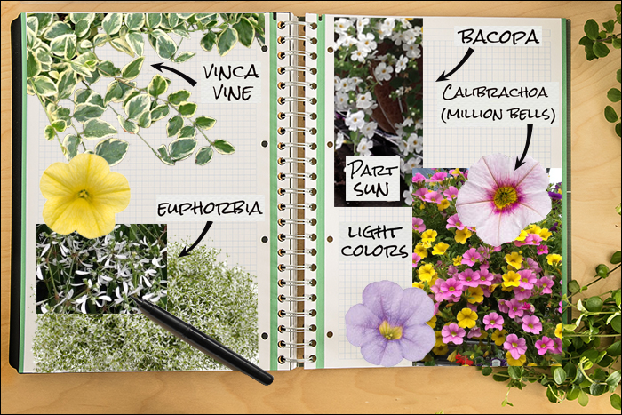 Garden Notebook – A Sweet Annual Container