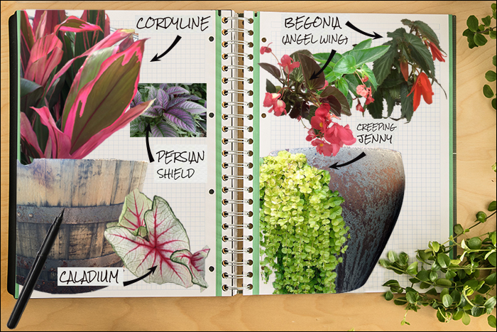 Garden Notebook – A Spectacular Annual Container