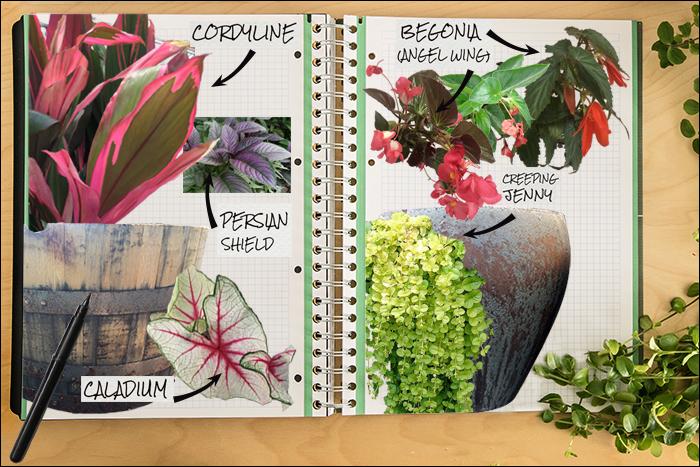 Garden Notebook – A Spectacular Annual Container