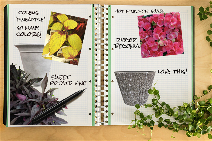 Garden Notebook – Annual Containers – Shade, Sun, Spectacular, Sweet!