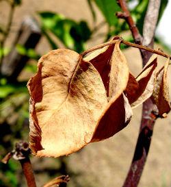 5 Garden Myths