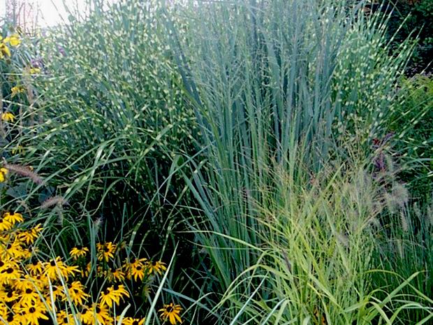 Where is my ornamental grass?!