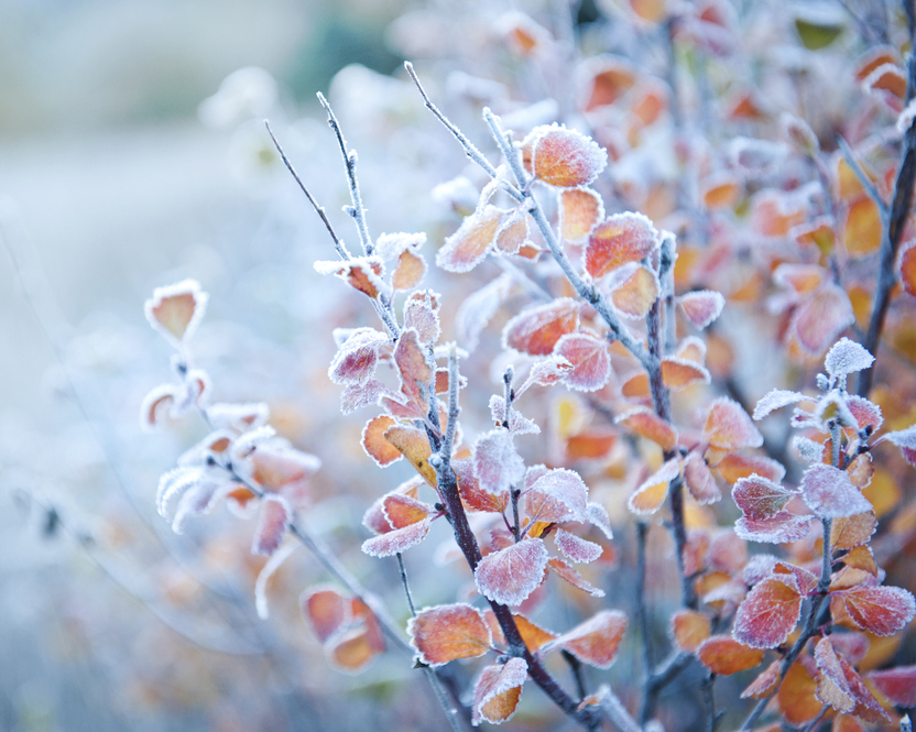 October 19th, 2019 – Winter Survival for Gardens with Greg Greene