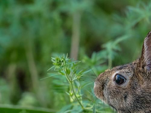 Plants That Rabbits Don't Prefer