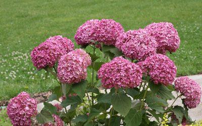 Plant for Success – Plants on Sale!