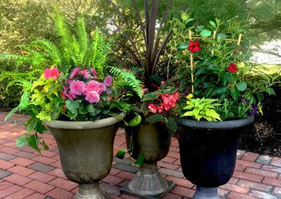 Container Garden Special!