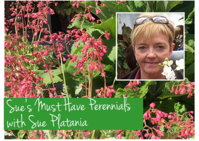 April 21st, 2018 – Sue's Must Have Perennials with Susan Platania