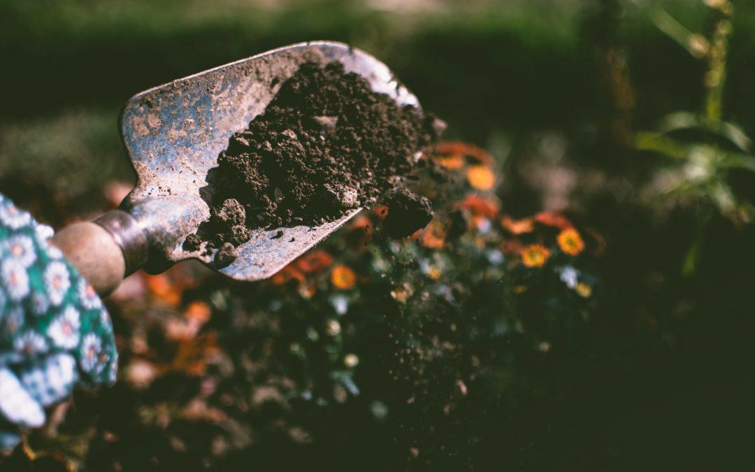 Garden Notebook – Summer Bloomers