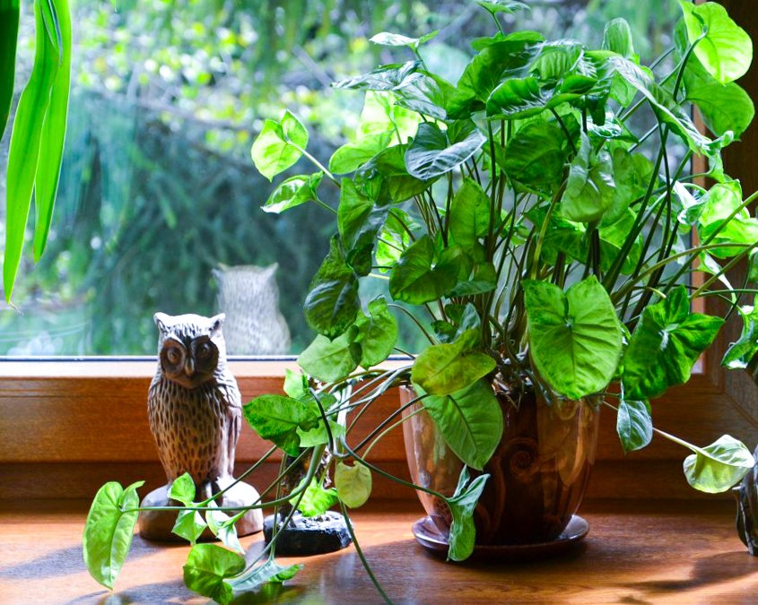 Getting Your Houseplants Through Fall