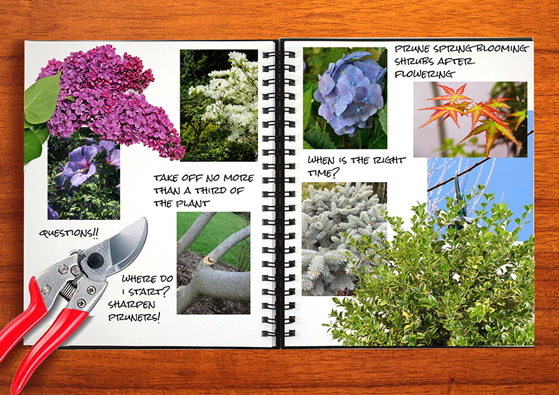 Garden Notebook – Pruning Tips