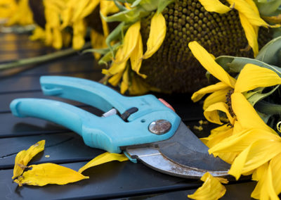 Pruning Times for Shrubs & Trees