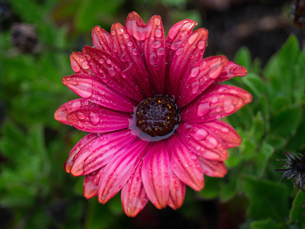 Wet Weather Garden Tips