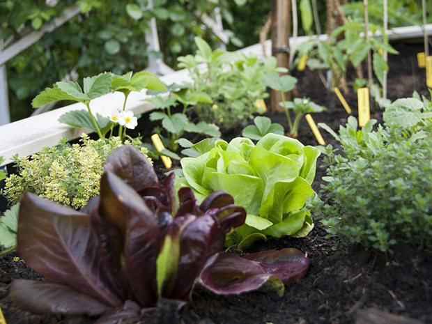 Raised Beds – Soil Needs