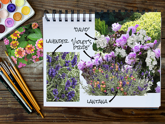 Garden Notebook – A Bed of Roses