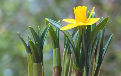 A Shortcut to Spring –  Sprouted Bulbs Have Arrived!