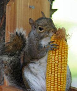 National Squirrel Appreciation Day