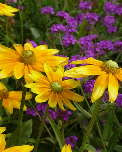 Add Sizzle to Summer Gardens