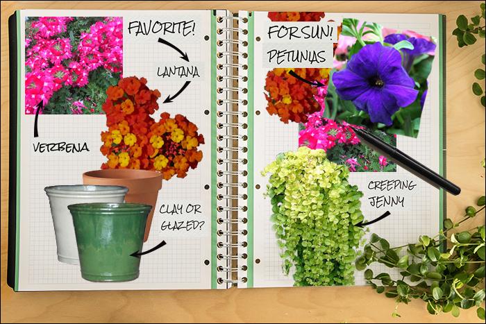 Garden Notebook – An Annual Container for Sun